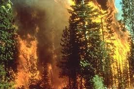ایده خاموش کردن  اتش سوزی در جنگلها  بدون ماشین و هواپیما
