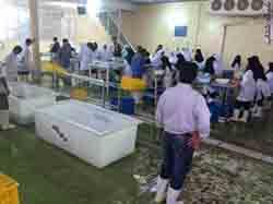 اجاره سردخانه زير صفر در كرج و البرز