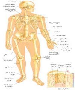 دائرة المعارف : اطلس بدن انسان (قابل استفاده برای تمام سنین)